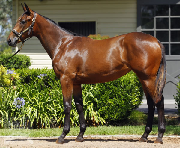 Onemorenomore at Gold Coast Yearling Sale Book 2