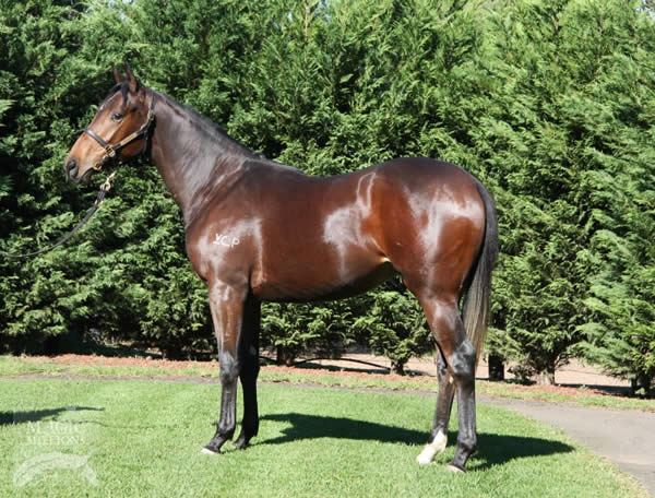Onemorenomore at National Yearling Sale Select Session