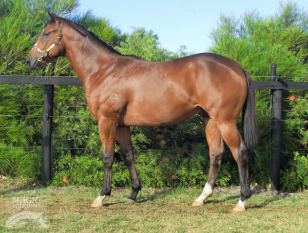 Foreplay at Perth Yearling Sale