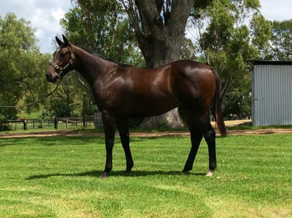 Onemorenomore at Classic Yearling Sale Summer Book