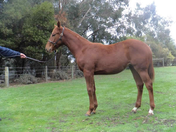 Von Costa de Hero at Great Southern Weanling Sale