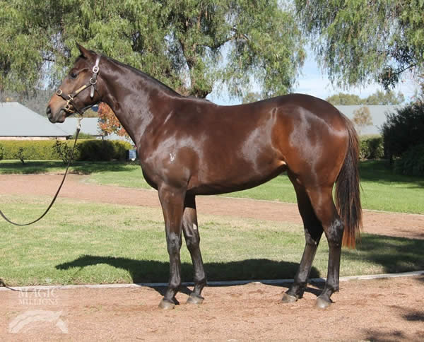 Onemorenomore at National Yearling Sale