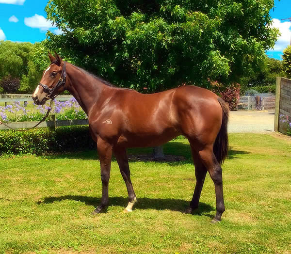 Keeper at Festival Yearling Sale