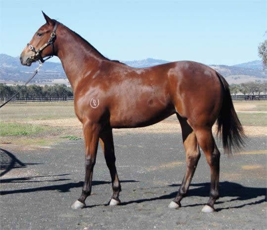 Onemorenomore at Scone Select Yearling Sale