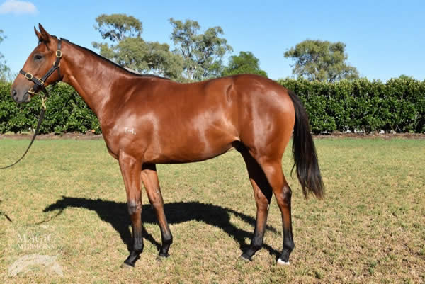 Onemorenomore at Gold Coast March Yearling Sale