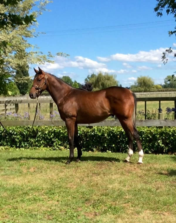Reliable Man at Festival Yearling Sale