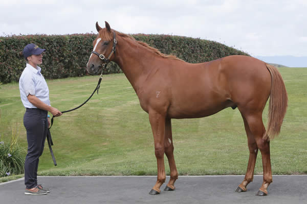 Reliable Man at Select Yearling Sale