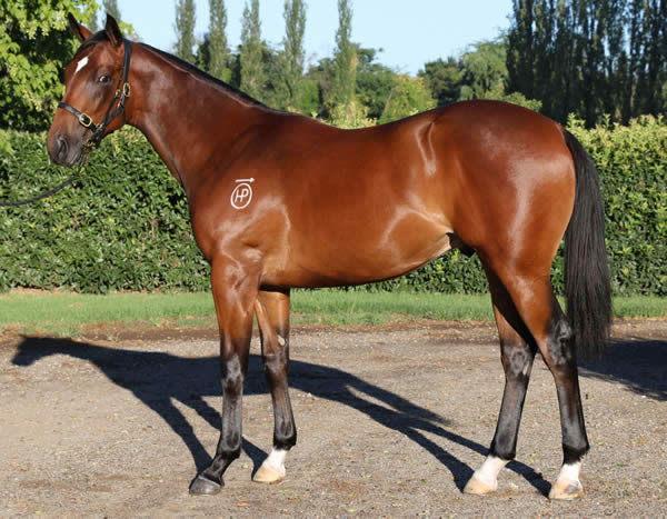 Onemorenomore at Classic Yearling Sale
