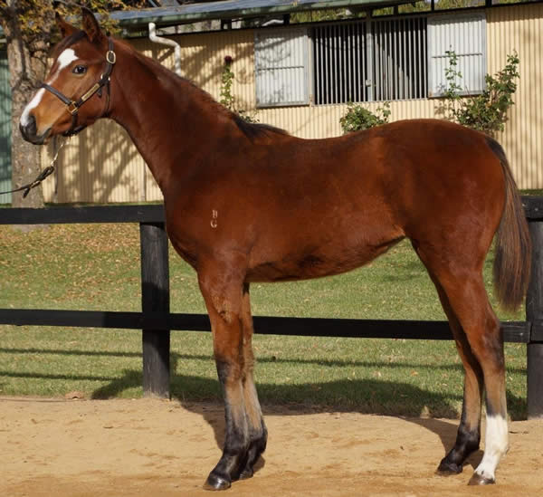 Hallowed Crown at Great Southern Weanling Sale
