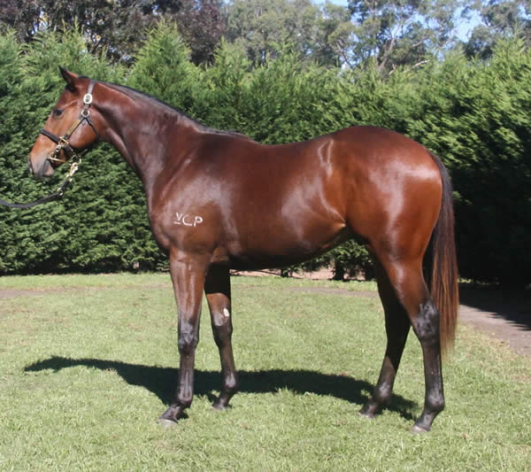 Onemorenomore at Scone Yearling Sale