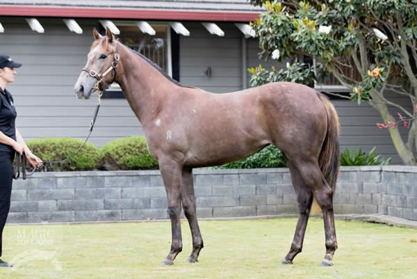 Reliable Man at Gold Coast Yearling Sale