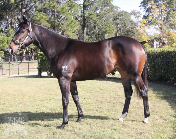Reliable Man at National Yearling Sale