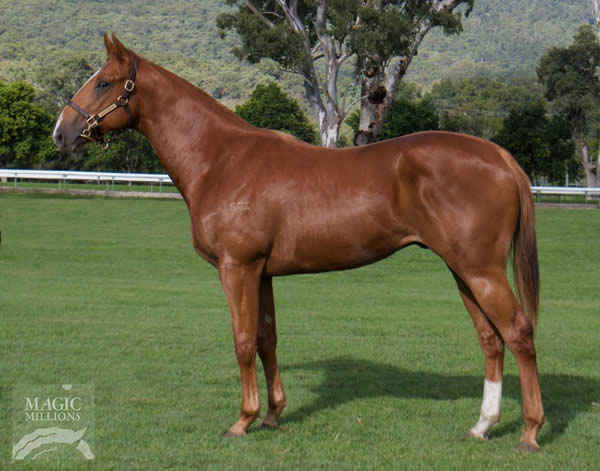 Von Costa de Hero at National Yearling Sale