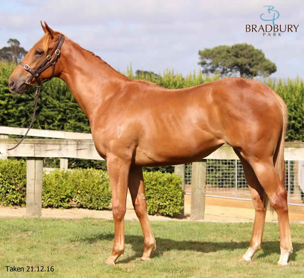 Reliable Man at Premier Yearling Sale