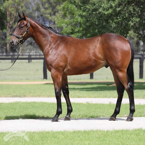 Hallowed Crown at Gold Coast Yearling Sale