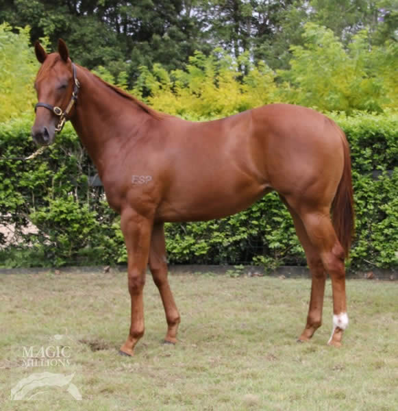Reliable Man at Gold Coast Yearling Sale Book 2