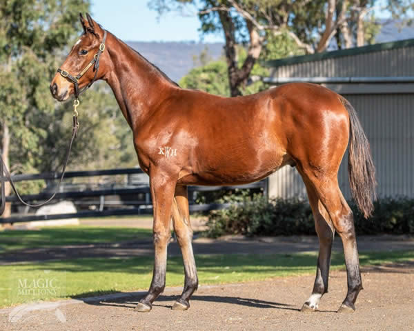 Hallowed Crown at National Weanling Sale