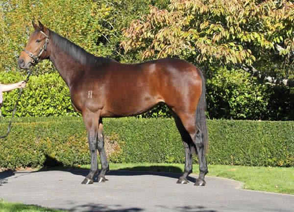 Reliable Man at Karaka May Sale
