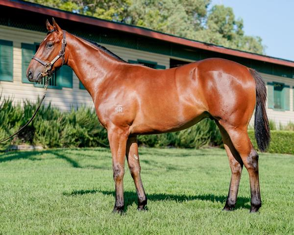 Hallowed Crown at Classic Yearling Sale