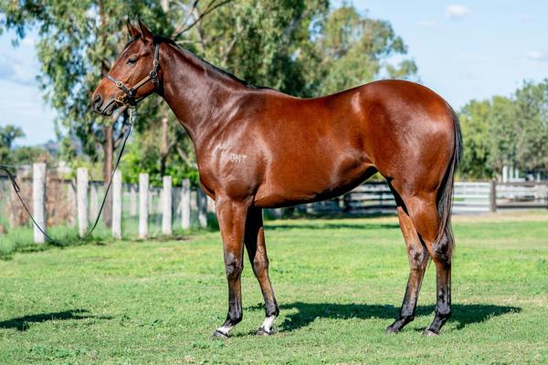 Hallowed Crown at Scone Yearling Sale