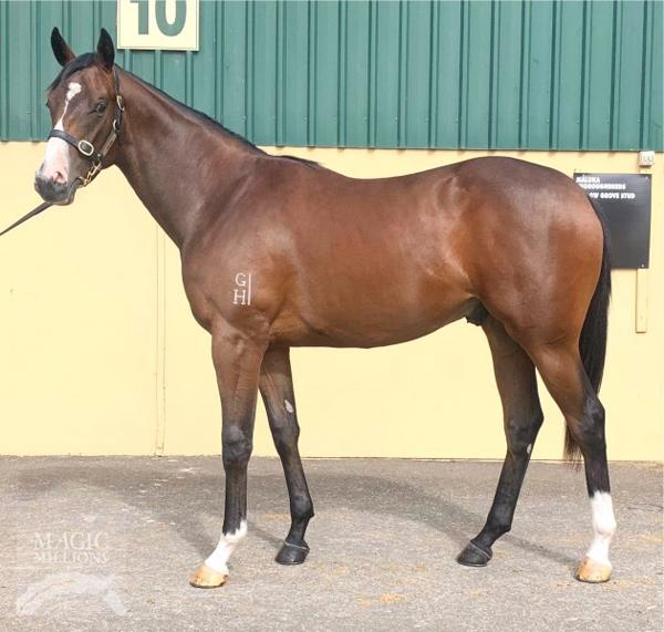 Hallowed Crown at Adelaide Yearling Sale Session 1