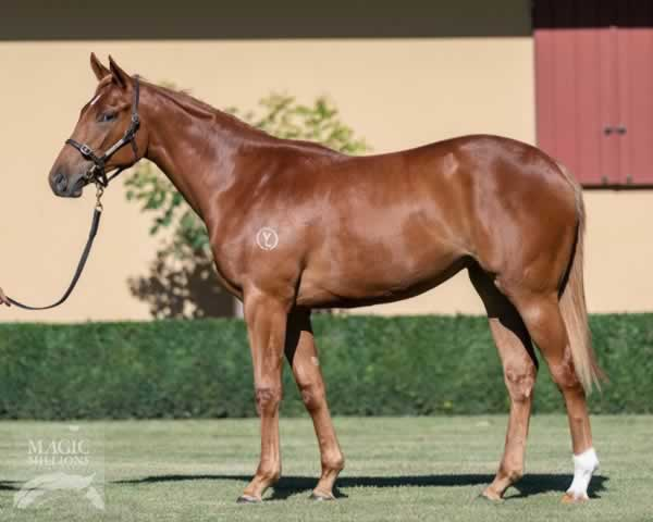 Breednet Gallery - Hungry Heart