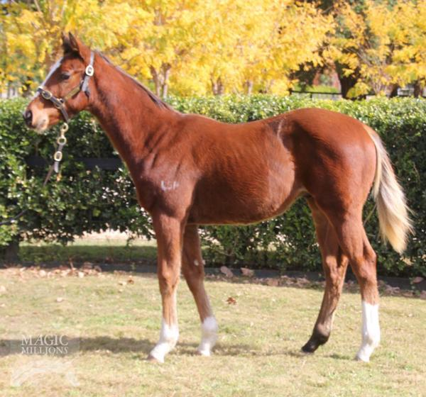 Reliable Man at National Weanling Sale