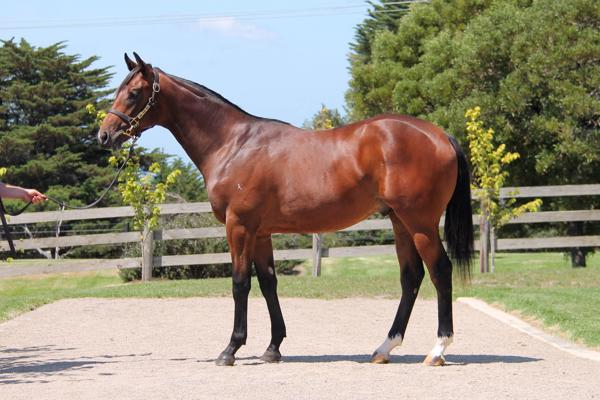 Reliable Man at Melbourne Premier Yearling Sale Book 1