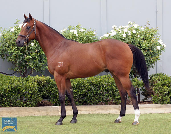Bowness Stud - MM Gold Coast Yearling Sale Lot 1