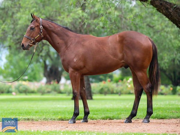 Vinery Stud - MM Gold Coast Yearling Sale Lot 1043