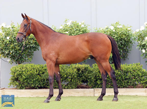 Bowness Stud - MM Gold Coast Yearling Sale Lot 1044