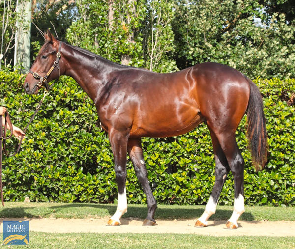 Newhaven Park - MM Gold Coast Yearling Sale Lot 1057