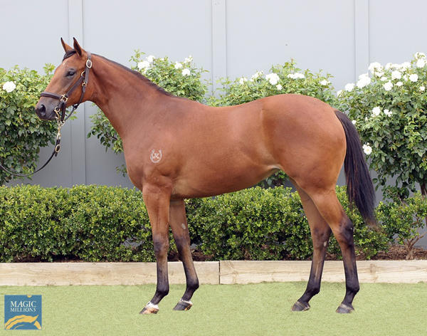 Bowness Stud - MM Gold Coast Yearling Sale Lot 1071