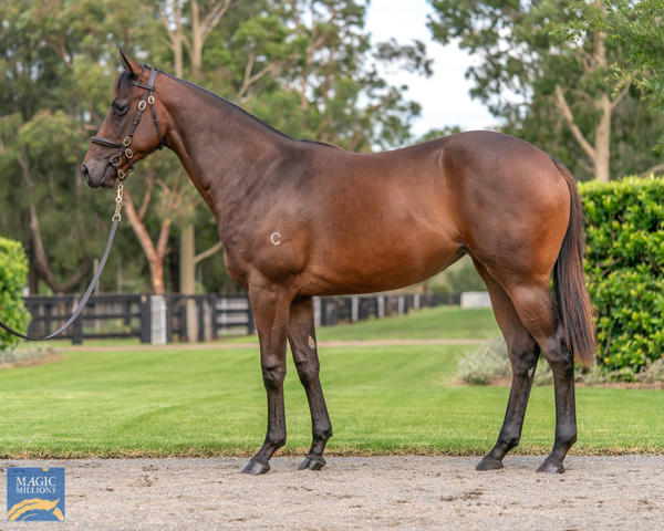 Coolmore Stud - MM Gold Coast Yearling Sale Lot 109