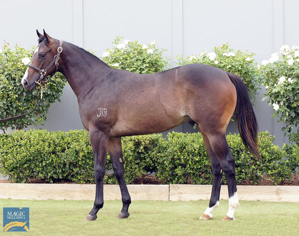 Bowness Stud - MM Gold Coast Yearling Sale Lot 1094