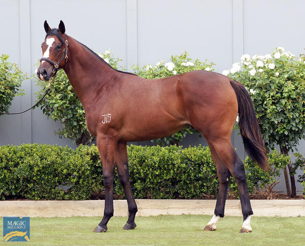Bowness Stud - MM Gold Coast Yearling Sale Lot 1099
