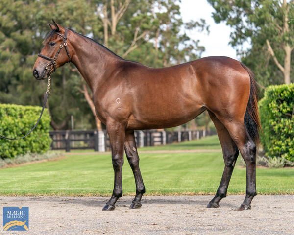 Coolmore Stud - MM Gold Coast Yearling Sale Lot 110