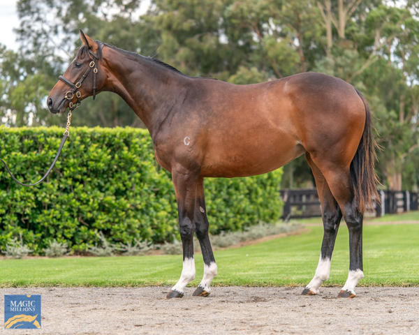 Coolmore Stud - MM Gold Coast Yearling Sale Lot 112
