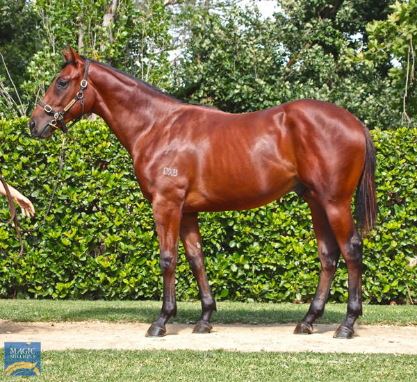 Newhaven Park - MM Gold Coast Yearling Sale Lot 1159