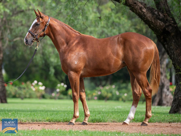 Vinery Stud - MM Gold Coast Yearling Sale Lot 1220