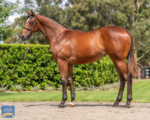 Coolmore Stud - MM Gold Coast Yearling Sale Lot 123