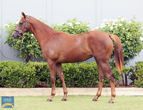 Bowness Stud - MM Gold Coast Yearling Sale Lot 1239
