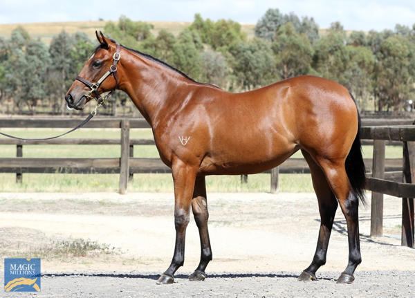 Daisy Hill Breeding And Investments - MM Gold Coast Yearling Sale Lot 1254
