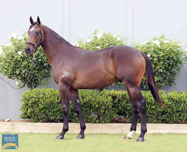 Bowness Stud - MM Gold Coast Yearling Sale Lot 1268