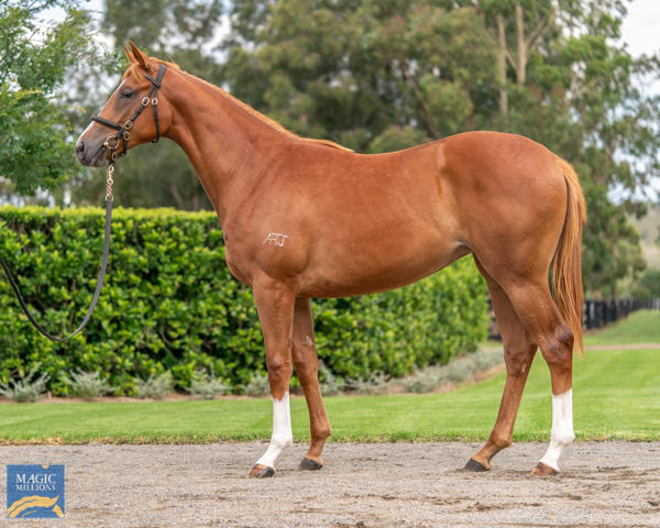 Coolmore Stud - MM Gold Coast Yearling Sale Lot 143