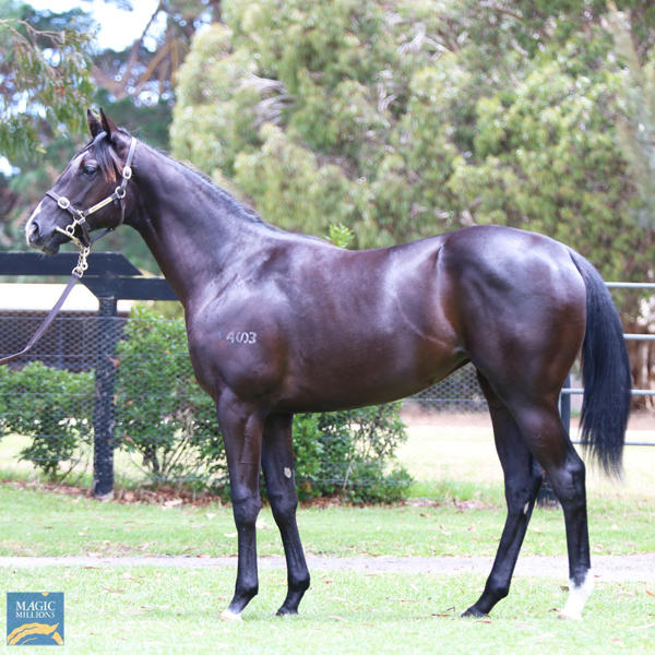 Mill Park Stud - MM Gold Coast Yearling Sale Lot 173