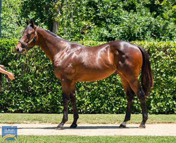 Newhaven Park - MM Gold Coast Yearling Sale Lot 185