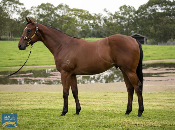 Torryburn Stud - MM Gold Coast Yearling Sale Lot 221