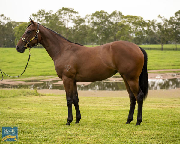 Torryburn Stud - MM Gold Coast Yearling Sale Lot 232
