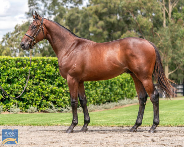 Coolmore Stud - MM Gold Coast Yearling Sale Lot 268